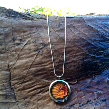 Living Locket Hawaiian Sunrise Shell Necklace
