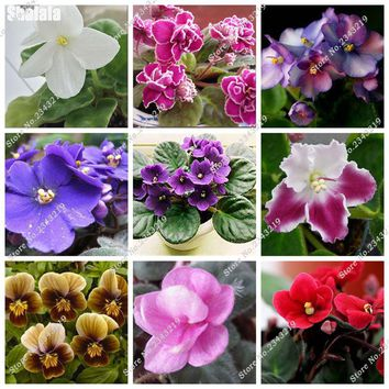 High Quality African Violet Seeds, Perennial Herb Bonsai Plant Beautiful Garden Plants Flowers For Rooms 200 Pcs Free Shipping