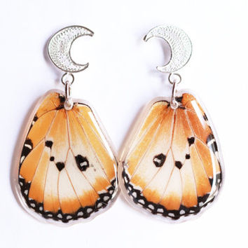 African Monarch Butterfly Wing Earrings With Sterling Silver Filigree - Danaus gilippus