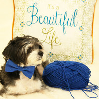 Royal Blue dog bow tie attached to collar, Pet wedding accessory, Dog lovers