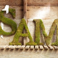 Live Moss Letters