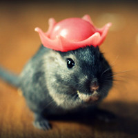 Gerbils in Hats Magnet This Will Make Your Refrigerator Happy