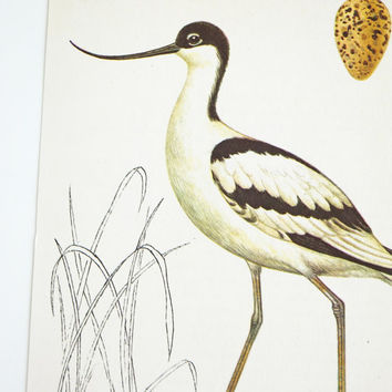 Avocet Picture, Seaside Decoration,  Coast Bird Picture, Holiday House decor