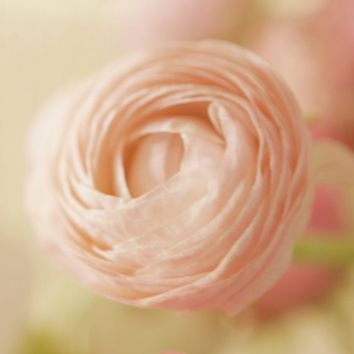 Delicate Pink Flower Fine Art Photograph by lucysnowephotography