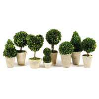 Tabletop Boxwood Topiary Set