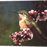 Hummer with Blossoms Animal Canvas Wall Art Print by Chris Vest