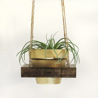 Hanging Planter, Air Planter, Modern Planter, Succulent Planter, Succulent Pot, Unique Planter, Wood Planter, Terracotta Pot, Gold Planter