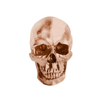 The Darwin | Faux Human Skull | Bronze Resin
