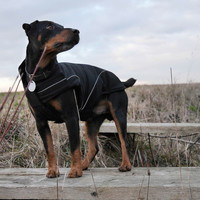 Black Dog Soft-Shell Winter Jackets w/ Fleece Lining Special Edt.