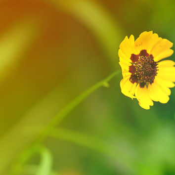 Lone Daisy Colorful Yellow Orange Bright Bokeh Flower Garden Zen Bedroom Bathroom  Home Decor | Fine Art Nature Photography