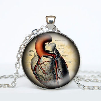 Human Anatomy Pendant Necklace - Heart - Anatomical Jewelry