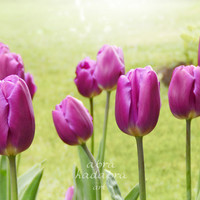 Purple Tulips Instant Digital Download Art Photograph Printable, purple flowers, floral photography, purple and green nature pthotography