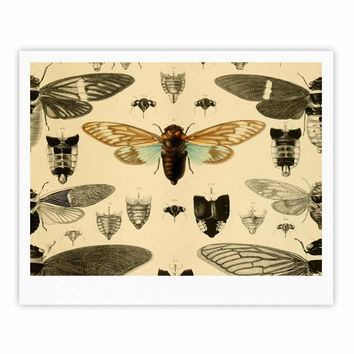 "Suzanne Carter ""Vintage Cicada"" Bugs Pattern Fine Art Gallery Print"