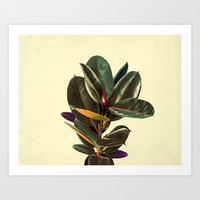 Rubber Plant Leaves Minimal Art Print by lostanaw