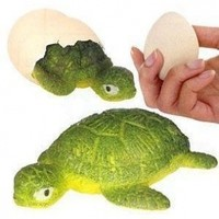 Hatchin Grow Turtle in Egg Magic Growing Animal Water:Amazon:Toys & Games