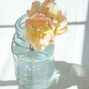 Pink and Yellow Tulip in Blue Vintage Jar - Fine Art Photo