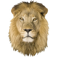 Lion Mount Wall Decal