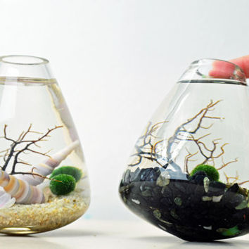 Marimo Aquatic Terrarium - Japanese Moss Ball Aquarium - Rolling Vase - Sea Fan - Sand - Shells