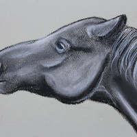 Equestrian Art , Print of Charcoal Drawing of Horse , Western Art , Western Art Print , Equine Drawing