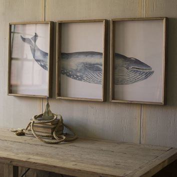 Triptych Framed Whale Print Under Glass