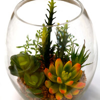 "Du Pot Assorted Cactus in Glass 7.6""H"
