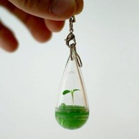 DIY Growing Pet Plant Seed Bonsai Phone Strap Charm Dangle: Cell Phones & Accessories