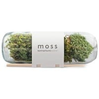 Moss Terrarium Bottle (491562026), Garden Plants | Organic Herbs & Vegetables | Organic Plants & Herbs by Potting Shed Creations | Plants