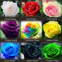 Rose Flower 9 Color 1800 Seeds Rainbow Black Blue Purple Green Yellow Red Pink White