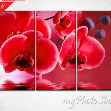Canvas print 3 parts red orchid image nature photo