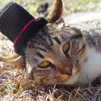 Bowler Hat for Cats - Derby Hat for Cats - The Gentleman's Kitty Bowler Hat - Bowler Hat for Dogs - Derby Hat for Dogs