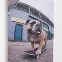 Skating Bulldog Wall Art