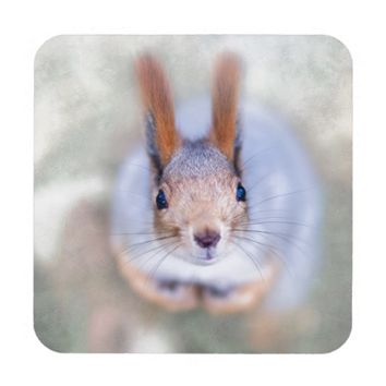 Squirrel looks at you from the bottom up beverage coaster