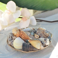 "Basket of Sea Shells Natural Shells Beach Luau Party Home Decor 6"" Weave Basket"