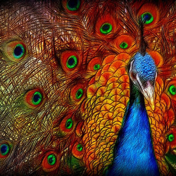 Canvas or Plexiglass 3D HD contemporary art LARGE digital painting colorful Peacock artwork, ready to hang