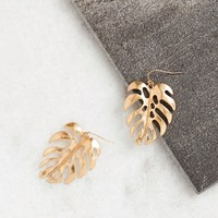 Sun Soaked Gold Monstera Leaf Earrings