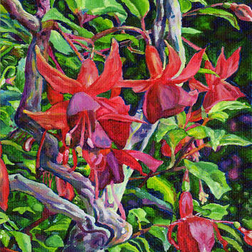 "Giclee print on canvas, matted - Hanging Fuchsia - 8"" x 10""  - Signed/Editioned"