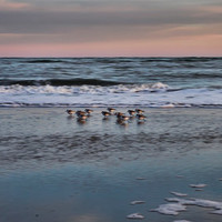 Panoramic photography, beach, ocean, shore birds, blue, purple, pink, seafoam, atlantic, Wild Dunes Beach, Isle of Palms NC, North Carolina