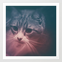 photo cat Stefan #photo #cat Art Print by jbjart