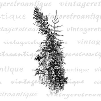 Cardinal Flower Digital Printable Download Wildflower Graphic Image Antique Clip Art for Transfers Making Prints etc HQ 300dpi No.3665