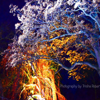 Fine Art Photography Print  Night Time Nature Mysteric Trees Lighting Home Decor or Wall Art