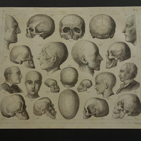 SKULL anatomy print 1849 original old antique anatomical poster with vintage pictures of skulls head heads craniometry brain - 23x29c 9x12""