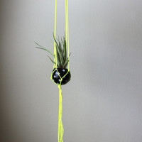Neon Yellow Macrame Air Plant Hanging Planter with Air Plant - Black + White + Neon Yellow