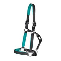 Colorful Padded Halter | Dover Saddlery