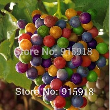 New Colorful Rainbow Grapes seed 300 pcs/lot Rare species bonsai fruit Grape seeds,DIY home garden,easy to grow