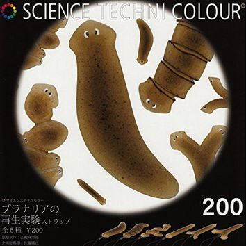 Science Technicolor Planarian Strap 6 Pics Set From Japan