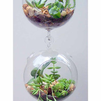 Clear Globe Hanging Terrarium Air-plant Garden, with Hook