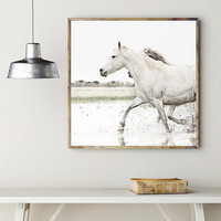 Horse photography,White horse photography,Horse Print,Xmas gift for sisters,Animal photography,horse wall print,white horse photo