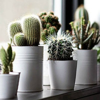 Windowsill Cactus Collection, five fancy varieties, low maintenance, drought tolerant, container plants or desert garden, housewarming gift