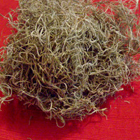 Authentic Spanish Moss Stuffing for Voodoo Doll or Poppet