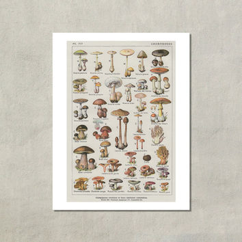 Mushrooms Champignons French Botanical Print - 8.5 x 11 Print -  also available in 11x14 and 13x19 - see listing details